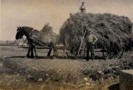slagtning af heste